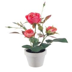 Plant compleet in pot